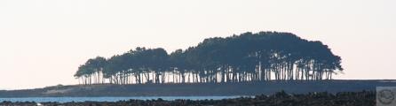 <h5>Golf du Morbihan (56)</h5><p>16 cm x 50 cm</p>
