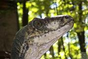 <h5>Vélociraptor : Parc des Dinosaures (09)</h5><p>21 cm x 29,7 cm</p>